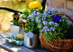 Spring Has Sprung - Gardening Tips